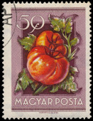 Stamp printed in Hungary shows Tomatoes — Stock Photo