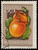 Stamp printed in Hungary shows Apricots — Stockfoto