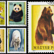 Stamps printed in Hungary show bears — Stock Photo #66844957