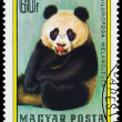 Stamp printed in Hungary shows Giant panda — Stock Photo #66845307