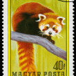 Stamp printed in Hungary shows Red panda — Stock Photo #66845721