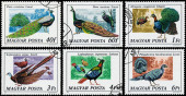 Stamps printed in Hungary show Peacock birds — Stock Photo