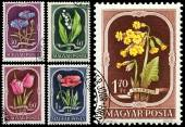 Stamps printed in Hungary show Flowers — Stock Photo