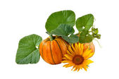 Pumpkin entwined with leaves on a white background  — Stock Photo