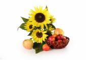 Flowers sunflowers and ripe apples on a white background — Stock Photo