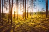 Solnedgång i höst skog — Stockfoto