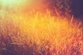 Erba secca gialla autunno sul prato. tonica foto istantanea — Foto Stock