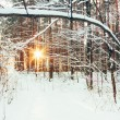 Winter Forest Landscape — Stock Photo #54072467