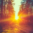 Forest Road Sunset Sunbeams — Stock Photo #60521893