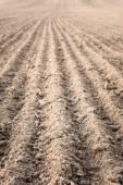それを耕起後フィールドの溝. — ストック写真