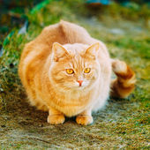 Red Cat Sitting On Green Spring Grass.  — Stock Photo