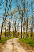 Spring Season In Park. Green Young Grass, Trees On Blue Sky Back — Stock fotografie