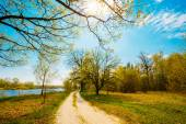 Spring Season In Park. Green Young Grass, Trees On Blue Sky Back — Stok fotoğraf
