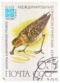 Razítko v sssr (rusko) ukazuje pygme eurynorhynchus pták — Stock fotografie