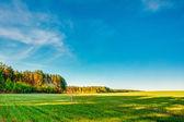 Sunset, Sunrise, Sun Over Rural Countryside Wheat Field. Spring  — Stock Photo