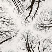 Árvores sem folhas durante a estação de inverno com céu branco. Abstra — Fotografia Stock