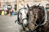 Two Horses Are Harnessed To Cart For Driving Tourists In Prague  — Stock Photo