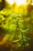 Sunset In Spring Forest. Young Leaf In Sunlight — Stock Photo