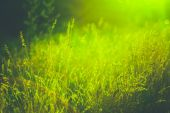Summer Grass On Meadow — Stock Photo