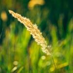 Dry Green Grass Field Meadow — Stock Photo #63359229