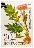 Stamp from USSR, shows medicinal plant from Siberia — Stock Photo