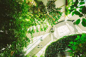 Greenhouse With Flowers. Temperate House Conservatory, Botanical — Stock Photo