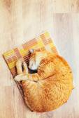 Mannelijke Kitten vreedzame oranje rode Cyperse kat slapen In zijn Bed op — Stockfoto