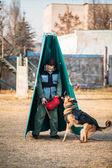 German Shepherd Dog training — Stock Photo