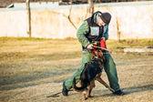German Shepherd Dog training — Stock fotografie
