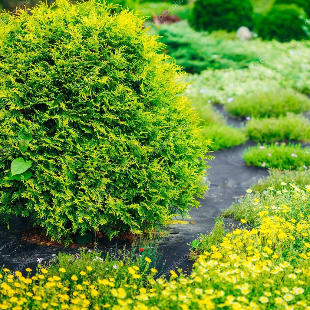 Jardim paisagismo design canteiro de flores rvores for Arbustos de jardin nombres