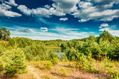 Green Summer Forest, Russian Nature — Stock Photo