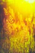 Sommer-Gras Wiese Nahaufnahme mit hellem Sonnenlicht. Sonnigen Frühling — Stockfoto