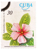 Stamp shows image of a Vinca Rosea — Stock Photo