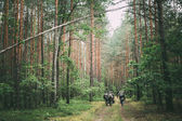 Unidentified reenactors dressed as German soldiers during march in forest — Stock Photo