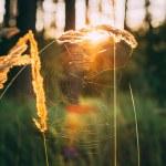 Prairie de herbe rouge sèche de champ. tonique, instant photo — Photo #72928997