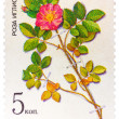 Stamp from the USSR Scott 2008 catalog no. 5381 shows a prickl — Stock Photo #73729481