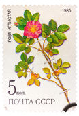 Stamp from the USSR Scott 2008 catalog no. 5381 shows a prickl — Стоковое фото