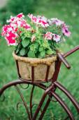 Decorative Vintage Model Old Bicycle Equipped Basket Flowers Gar — Stock Photo