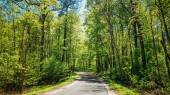 Good Asphalt Forest Road In Sunny Summer Day. Lane Running Throu — Stock Photo