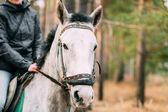Zblízka portrétní bílého koně — Stock fotografie