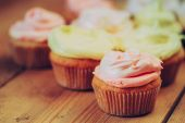 Dessert Sweet Gourmet Cupcakes With Multi-colored Frosting — Stock Photo