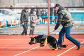 German shepherd dog training in Gomel Regional sports club and d — Stock Photo