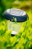 Small Solar Garden Light, Lantern In Flower Bed. Garden Design. — Stock Photo