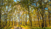 Sunny Day In Autumn Sunny Forest Trees, Green Grass. Nature Wood — Stock Photo