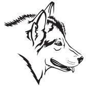 Malamute-hund — Stockvektor