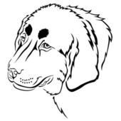 Dog muzzle contour — Stock Vector