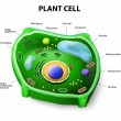 Plant cell anatomy — Stock Vector #52133127