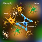 Glial cells — Vector de stock