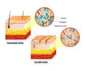 Skin aging — Stock Vector