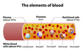 The elements of blood. blood vessel cut section — Stock Vector